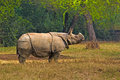 Asian rhinoceros in delhi zoo Stock Images