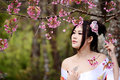 Asian sexy woman wearing traditional japanese kimono and wild himalayan cherry or cherry blossom Stock Photo
