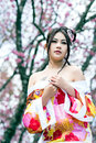 Asian sexy woman wearing traditional japanese kimono and wild himalayan cherry or cherry blossom Stock Image