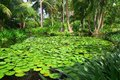 Asian tropical garden with small lake and lily pads photo showing a beautiful some coconut trees Stock Photography