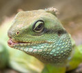 Asian water dragon 1 Stock Photos