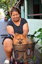 Asian woman drive her pet spitz dog in a bicycles basket