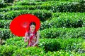Asian woman wearing traditional Chinese dress and red umbrella in green tea field Royalty Free Stock Photo