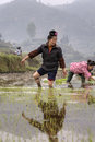 Asian young farmer woman walks barefoot through mud of ricefield