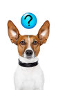 Ask the dog Royalty Free Stock Photos
