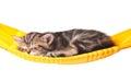 Asleep kitten Royalty Free Stock Photo