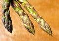 Asparagus raw against orange backgound Stock Photo