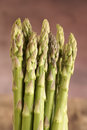 Asparagus spears with shallow depth of field Royalty Free Stock Photos