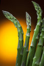 Asparagus a tall plant of the lily family with fine feathery foliage cultivated for its edible shoots Royalty Free Stock Image