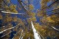 Aspen Royalty Free Stock Photo