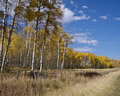 Aspen Fence Stock Photo