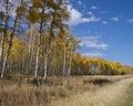 Aspen Fence Stock Photo