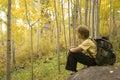 Aspen Serenity Stock Photo