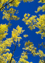 Aspen Sky Royalty Free Stock Photography