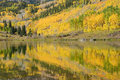 Aspen tree with reflection Royalty Free Stock Photo