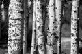 Árbol tallado