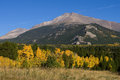 Aspen trees in autumn colorado with longs peak the background Stock Photos