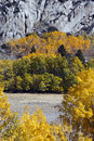 Aspens beneath granite autumn aspen trees rugged june lake loop sierra nevada california Stock Photography