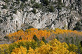 Aspens beneath granite autumn aspen trees rugged june lake loop sierra nevada california Royalty Free Stock Image