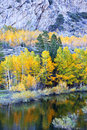 Aspens beneath granite autumn aspen trees rugged morning light june lake loop sierra nevada california Stock Photo