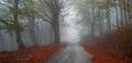 Asphalt autumn road