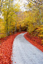 Asphalt autumn road Royalty Free Stock Photo