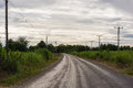 Asphalt country road. Royalty Free Stock Photo