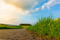 Asphalt road through the field Royalty Free Stock Photo