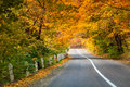Asphalt road in golden the autumn forest. Royalty Free Stock Photo