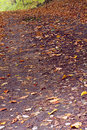 Asphalt road in the mixed forest beech oak autumn saarland germany Stock Photo