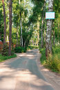 Asphalt road through pine trees and label on front tree path the the green Stock Photos