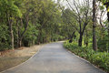 Asphalt way in the park Royalty Free Stock Photography