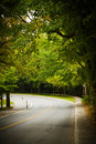 Asphalt winding curve road beech forest Stock Image