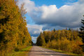 Asphalted road passing autumn wood Royalty Free Stock Photos
