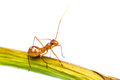 Assassin bug Stock Photo