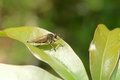 Assassin fly on a plant s leaf Royalty Free Stock Photos