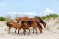 Divoký poníky na pláž