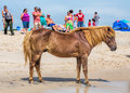 Assateague wild pony a horse of island maryland usa on the beach there are people on the beach watching the these animals are Stock Images