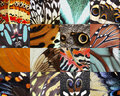 Assembled various beautiful wings of butterflies Royalty Free Stock Photography