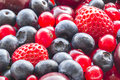 Assorted berries Stock Images