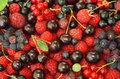 Assorted berries raspberries black and red currants saskatoon cherry gooseberry as background Stock Photography