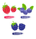Assorted berries set vector illustration. Royalty Free Stock Photo