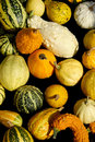 Assorted Gourds Stock Photos