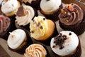 Assorted Gourmet Cupcakes Stock Photo