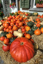 Assorted pumpkins shaped and colored ready for autumn Stock Photography