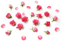 Assorted roses heads on white background. Overhead view. Flat lay
