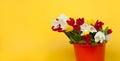 Assorted tulip bunch in the basket