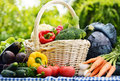 Assorted vegetables in wicker basket in the garden raw Stock Photos