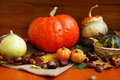 Assortment of autumn pumpkins Royalty Free Stock Image