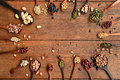 Assortment of beans and lentils in wooden spoon